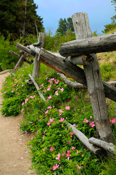The trail to Sprague Lake, located in Rocky Mountain National Park, Estes Park, CO.